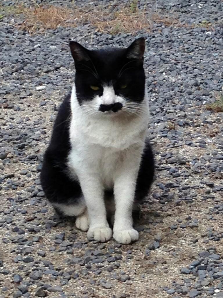 我輩は猫であるっぽいネコ発見