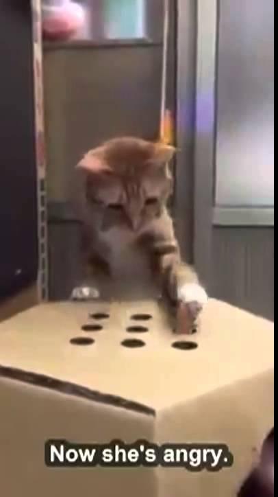 猫を飼うかどうか迷っているあなたに見て欲しい動画です。